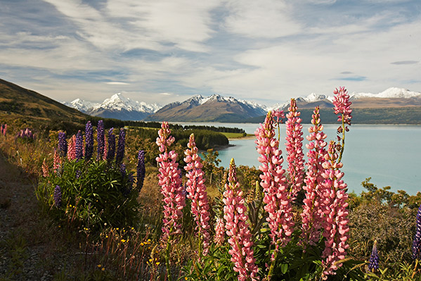 MoaTrek-Kakapo-Day-14-Mount-Cook.jpg