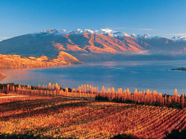 Seasons Autumn-in-New-Zealand.jpg