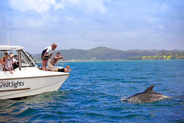 Dolphins next to the boat, Bay of Islands