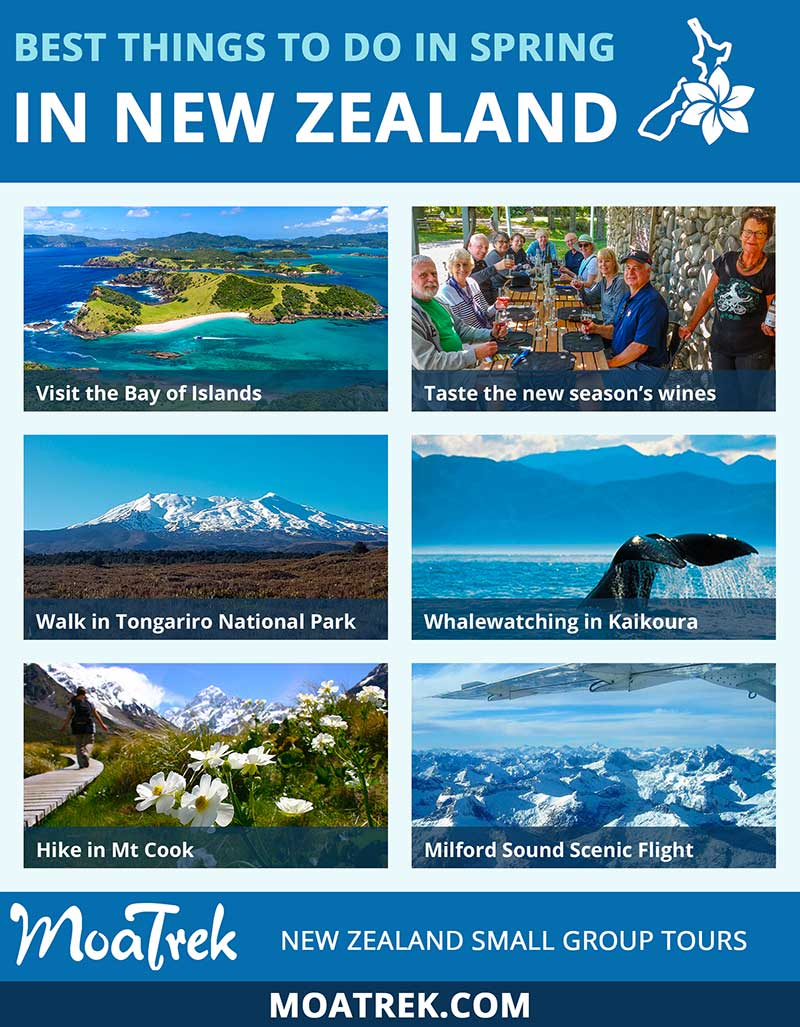 Infographic introducing the best springtime activities in New Zealand