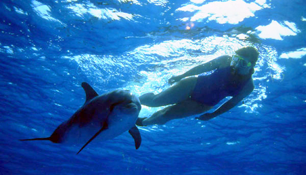 swimmer and dolphin under water
