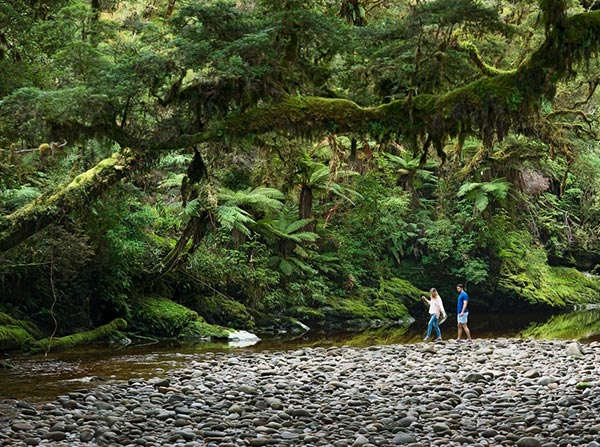 Native forest and river in Kahurangi National Park - Julian Aspse