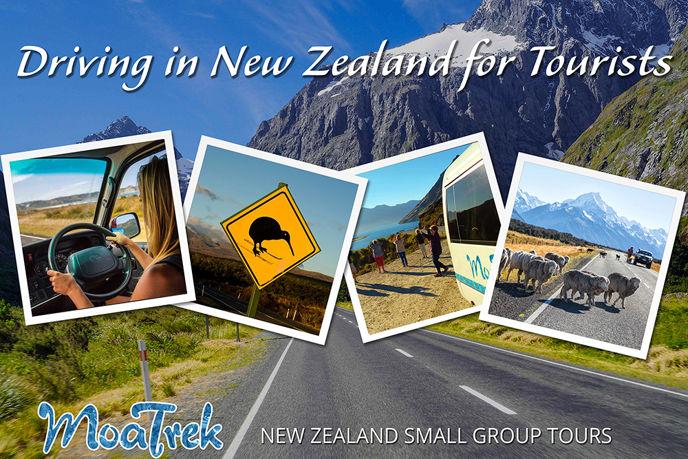 Driving in New Zealand for tourists blog cover