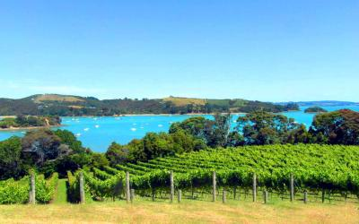 vineyard with a sea view, Waiheke wine tour