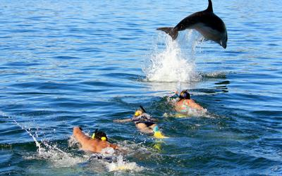 Dolphin leaping over swimmers, New Zealand