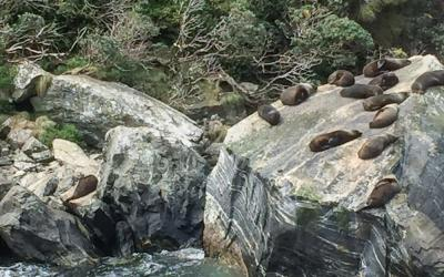 MoaTrek Milford Sound Cruise Seal Rock