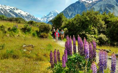 Walking in Mt Cook