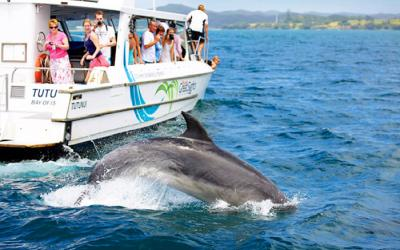 Dolphin cruise Bay of Islands, 3 week NZ itinerary