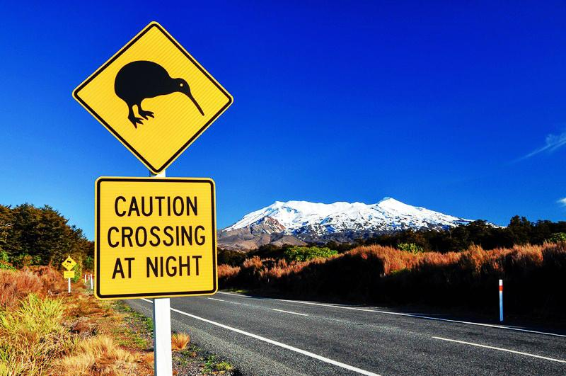 Caution Kiwi! Road sign in New Zealand - Driving in NZ