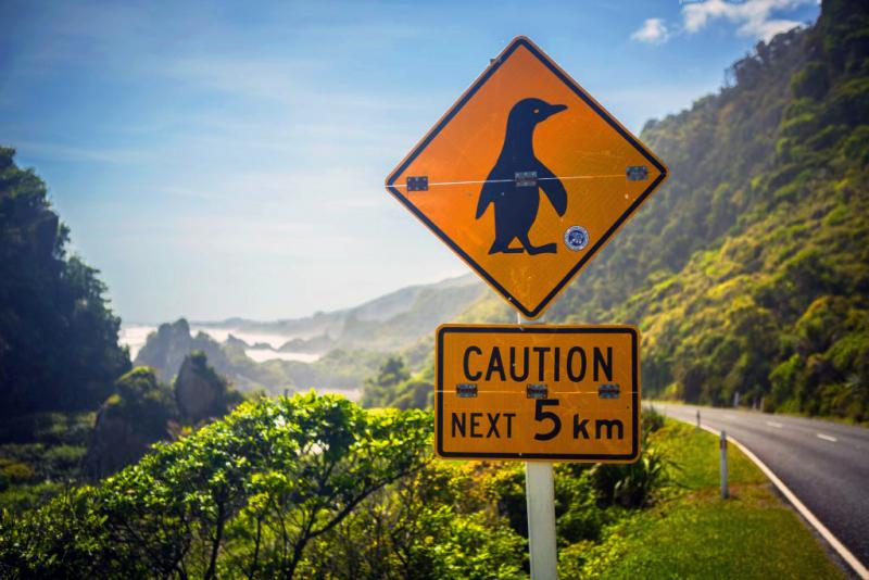 Watch out for Penguins! Road sign in New Zealand - Driving in NZ