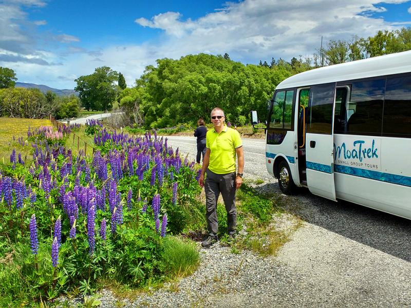Tour coach stoppping by Lupins, South Island High Country