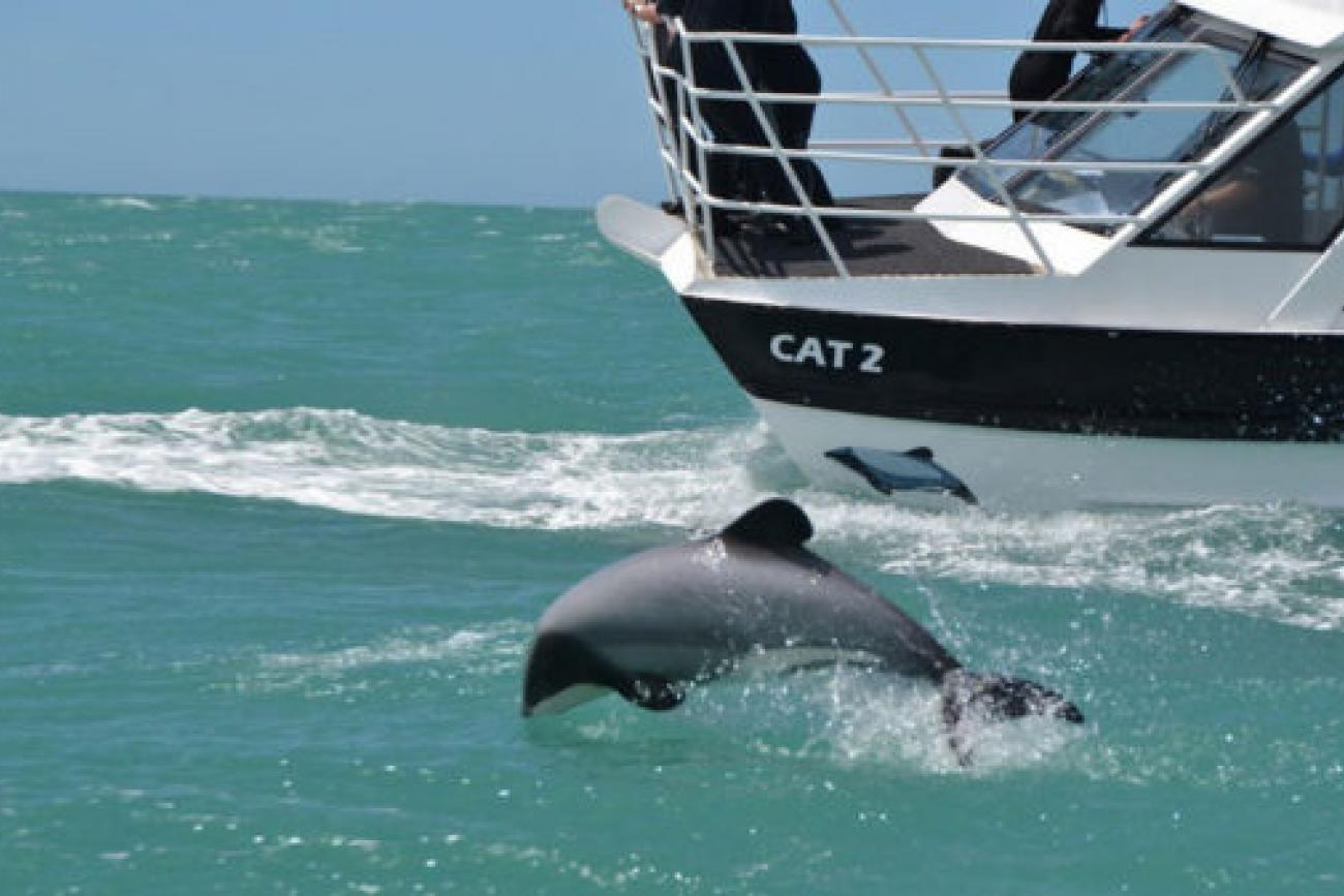 Christchurch - Akaroa Harbour Cruise with Black Cat or Dolphins