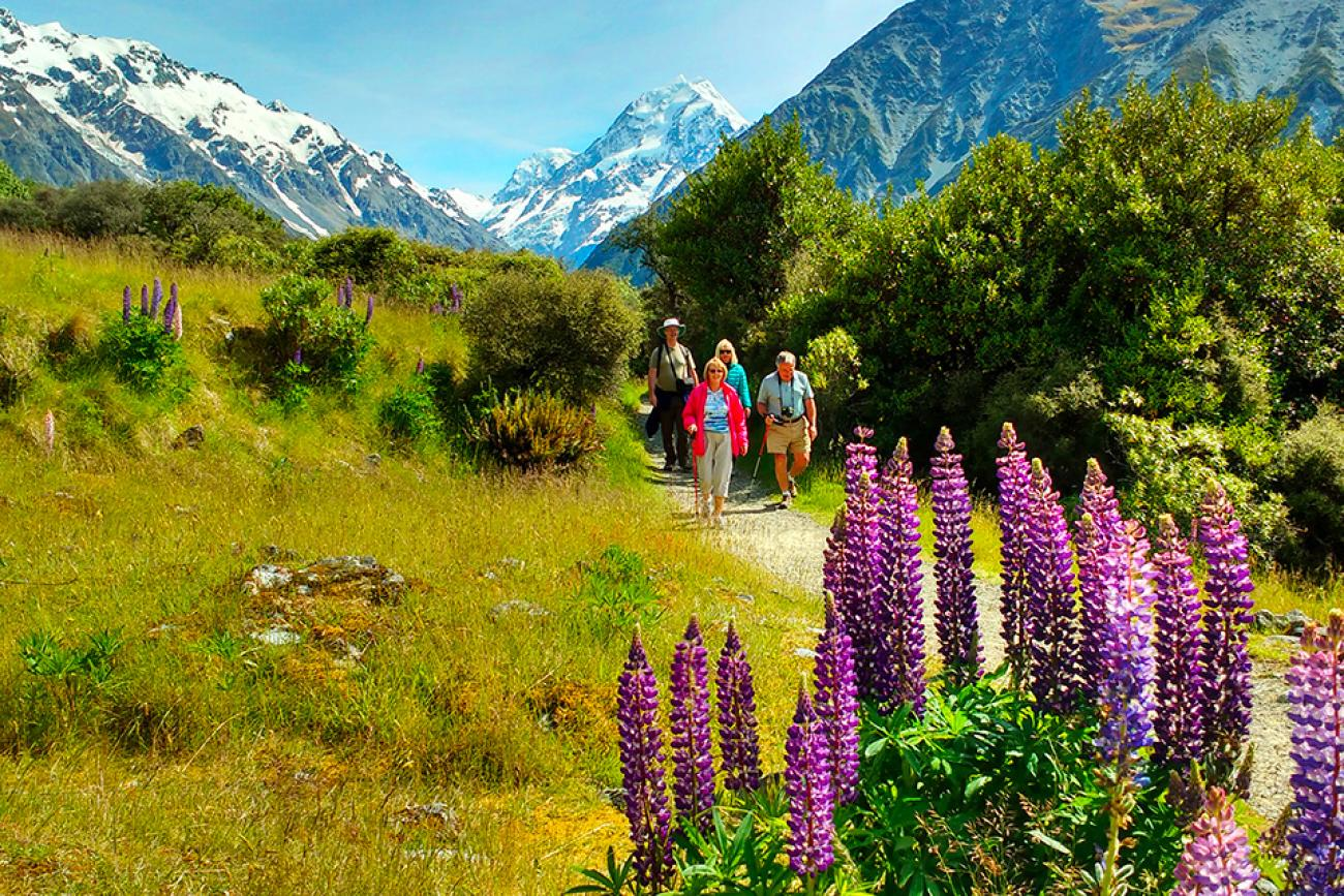 Walk at Mt Cook