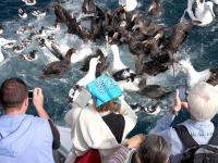 Getting up close to rare seabirds on the Kaikoura Albatross Encounter