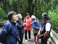 Small Group New Zealand Tours Forest