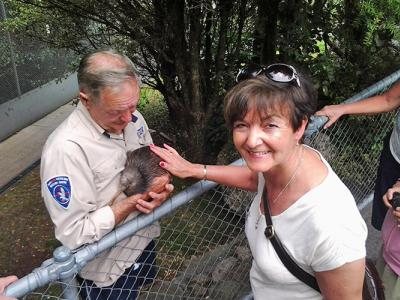 Close encounter with an endangered kiwi, NZ's national bird