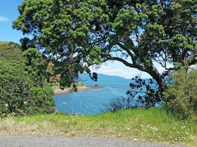 Small Group New Zealand Tours Pohutukawa