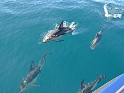 Small Group New Zealand Tours Hectors Dolphins