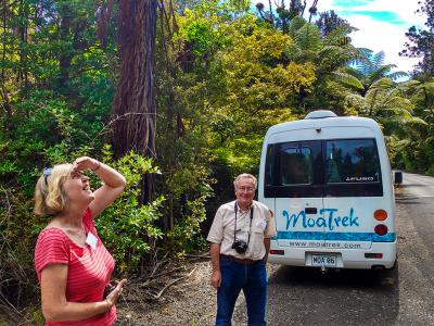 Our coach in Waipoua forest - MoaTrek Tour Gallery