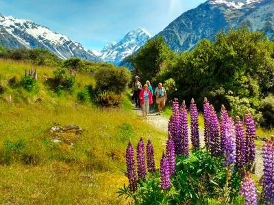 Lupins with Mt Cook in the background - MoaTrek Tour Gallery