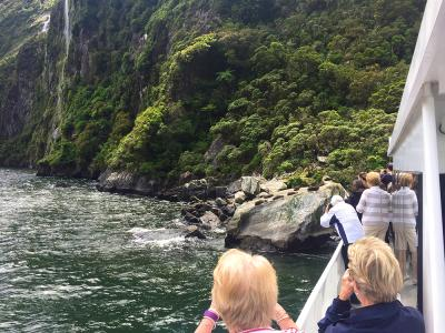 Fur seals on the rocks, Milford Sound cruise - MoaTrek Tour Gallery February 2017