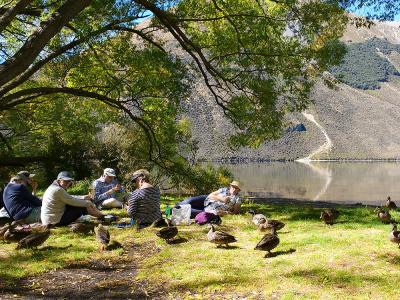 Lunch with ducks at Lake Pearson, Canterbury- MoaTrek Tour Gallery