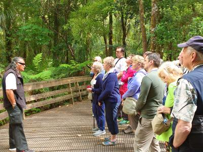 Guided Tour through Waipoua Forest, Northland - MoaTrek Tour Gallery
