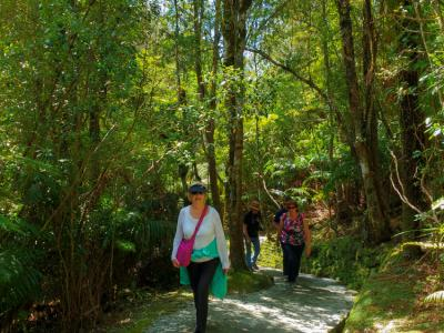 Walking through the native New Zealand bush at the wild west coast