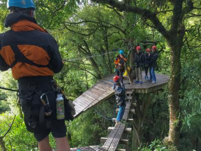 Ziplining through New Zealands native bush in Rotorua