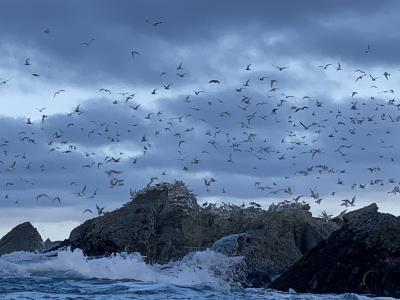 Seabirds off the coast of Kaikoura