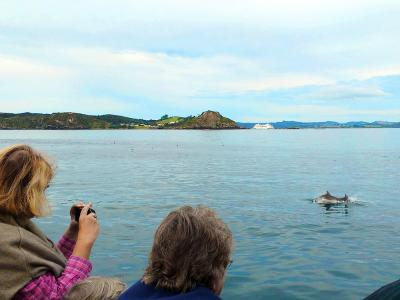 Dolphin tour in the Bay of Islands