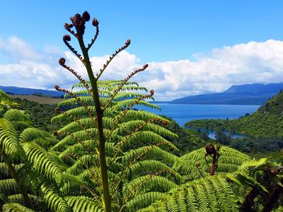 View of Lake Tarawera with tree fern - MoaTrek