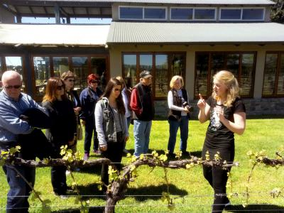 Learning all about grape growing in Marlborough - NZ Food & Wine with MoaTrek