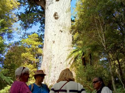 Tour group and guide at Tane Mahuta, Waipoua Forest