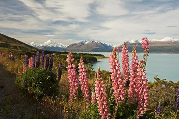 View over beautiful Mount Cook region