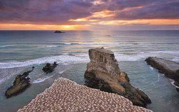 Sunset at the gannet colony, Muriwai Beach New Zealand