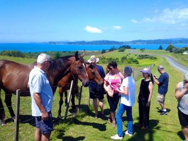 Small group meeting the horses - NZ Small Group Tours