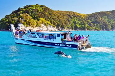 Cruising Abel Tasman with dolphins - NZ South Island Itinerary