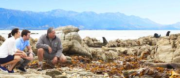 Viewing seals on the coast - Wildlife and Nature Tours NZ